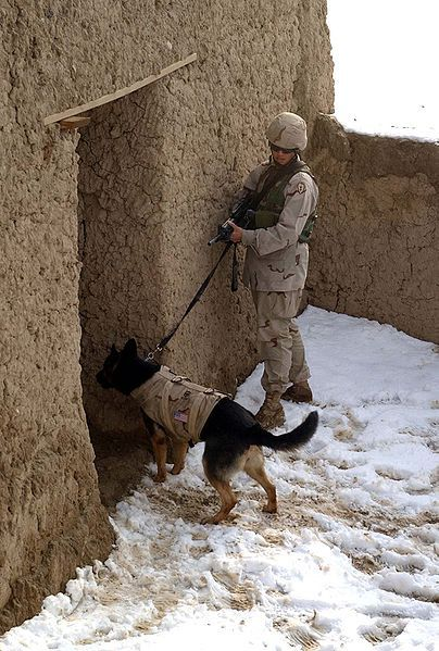 """Army Sgt. 1st Class Erika Gordon, kennel master for the 25th Military Police Company, uses a building for cover while her military working dog, Hanna wearing """"K9 Storm"""" body armor, clears a doorway at the military-operations-in-urban-terrain training site at Bagram Air Base, Afghanistan. Photo by Spc. Cheryl Ransford, USA"""
