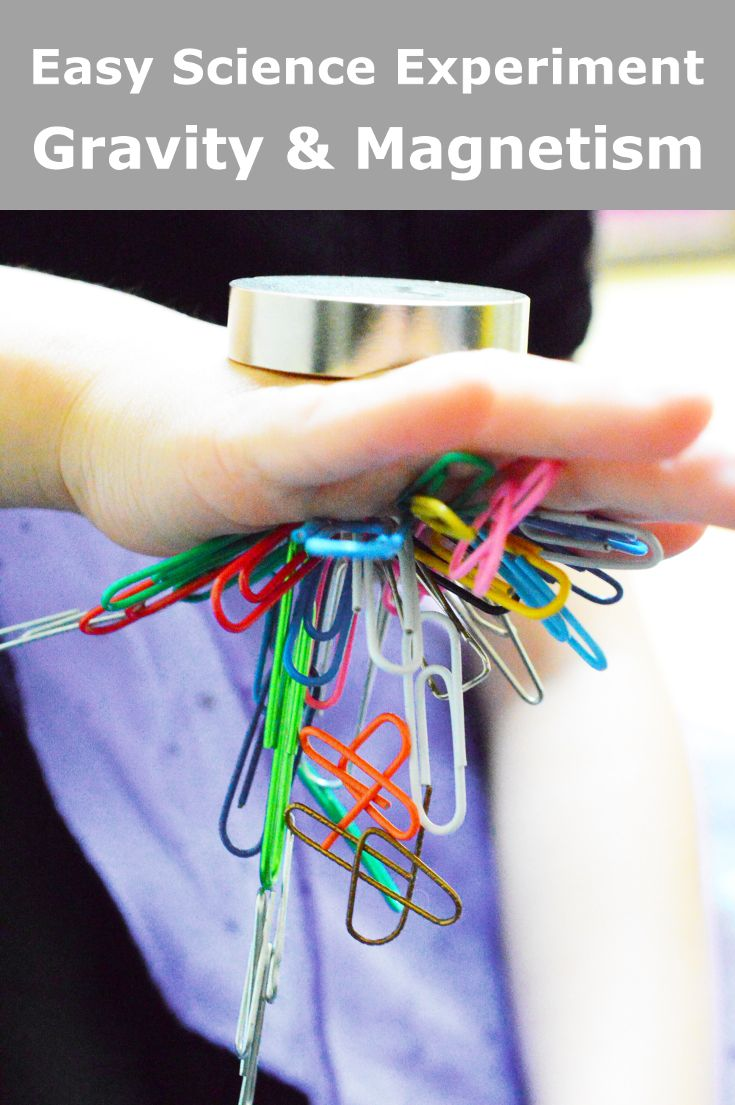 See how paper clips defy gravity and fly into your hands using a magnet. Experiment to learn about the properties of magnet and gravity. via @rookieparenting