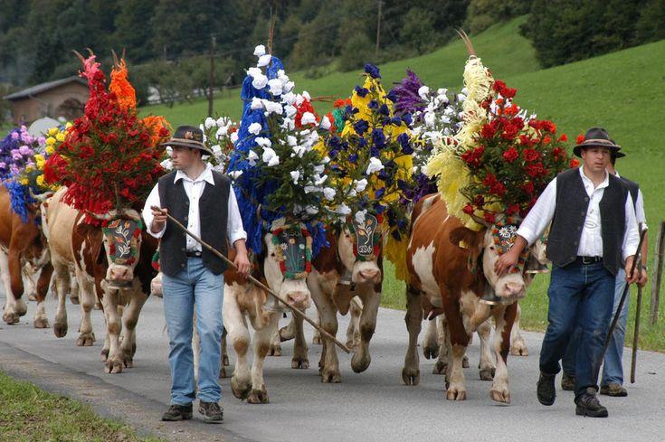 Long tradition in Tyrol / AUSTRIA. End of summer, the cows leave the mountain territories back to there base. Die lange Tradition der Almabtriebe, wie in Hopfgarten (oben), blieb über Jahrzehnte aufrecht. Im Vergleich zu den Almabtrieben anno dazumal (unten) ist der Kopfschmuck aber gewachsen.Fotos: Silberberger, Volkskunstmuseum