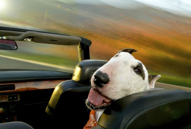 the unbounded delirium of dogs in cars captured by lara jo regan