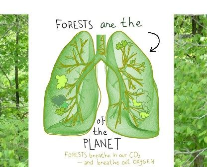 Learn why we can't live without trees!