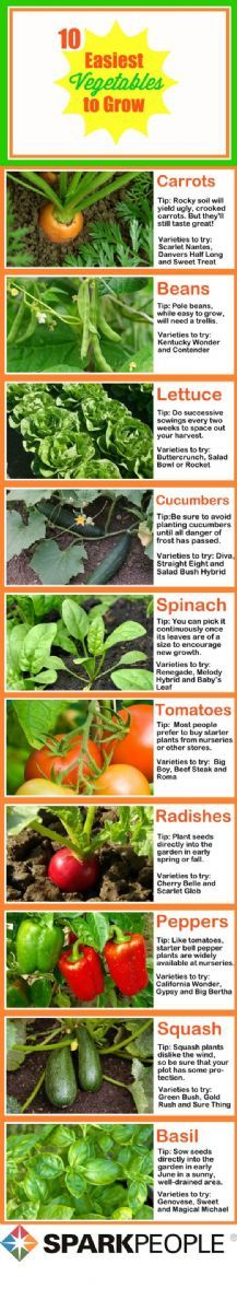 No need to think about what to plant this spring--we've done the work for you. Behold: the 10 easiest vegetables to grow! Your garden will be brimming with veggies in no time!
