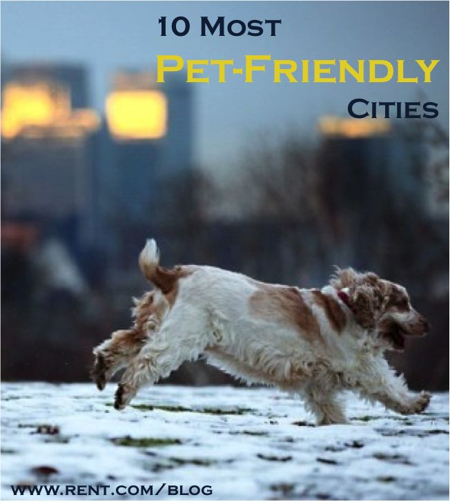 Most pet friendly cities best cities for pets for Most apartment friendly dogs