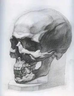 академический рисунок черепа карандашом видео: 22 тыс изображений найдено в Яндекс.Картинках