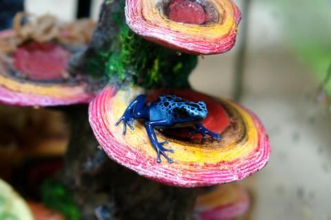 Penn Plax Pink Mushrooms on Rock Cage Ornament - Dart frogs love these, and so do geckos and small lizards!  They look real enough to fool your friends, and add something neat and different to your vivarium.