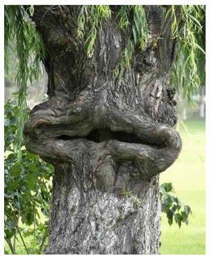 Такое вот дерево.