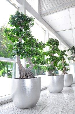 grote kamerplant - Google zoeken