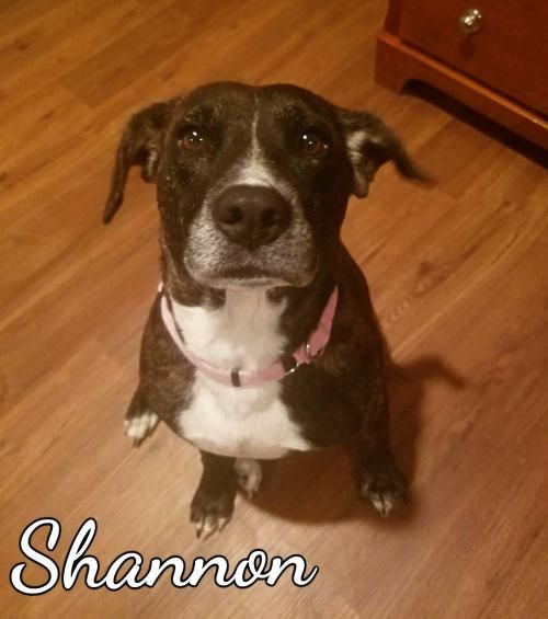 Shannon - THIRD COAST ANIMAL RESCUE in Spanish Fort, AL - ADOPT OR FOSTER - Adult Spayed Female Hound - Being in a No Kill facility isn't enough!  This girl needs a home and a family to love.  Please share! ADOPTING FROM A RESCUE SAVES THE DOG ADOPTED AND MAKES ROOM FOR ANOTHER TO BE RESCUED!