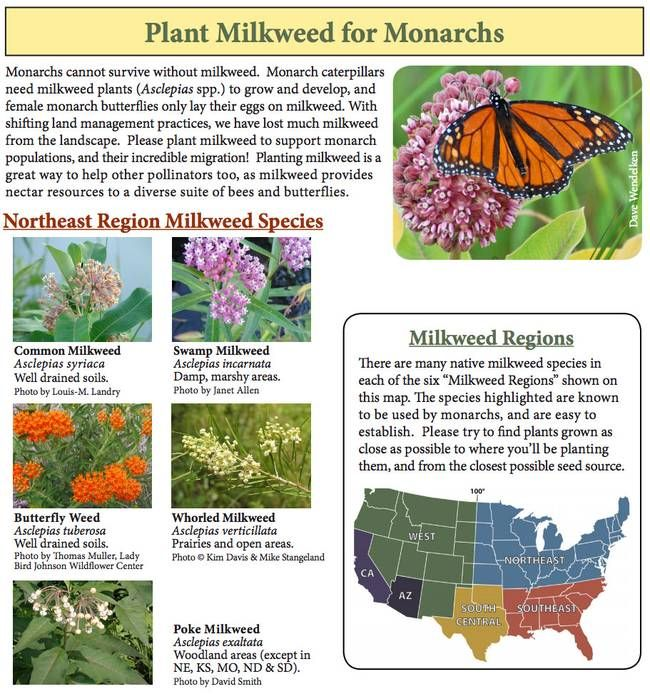 Superb You Can Help Stop The Monarch Butterfly Massacre By ... Gardening (plant  Milkweed!)
