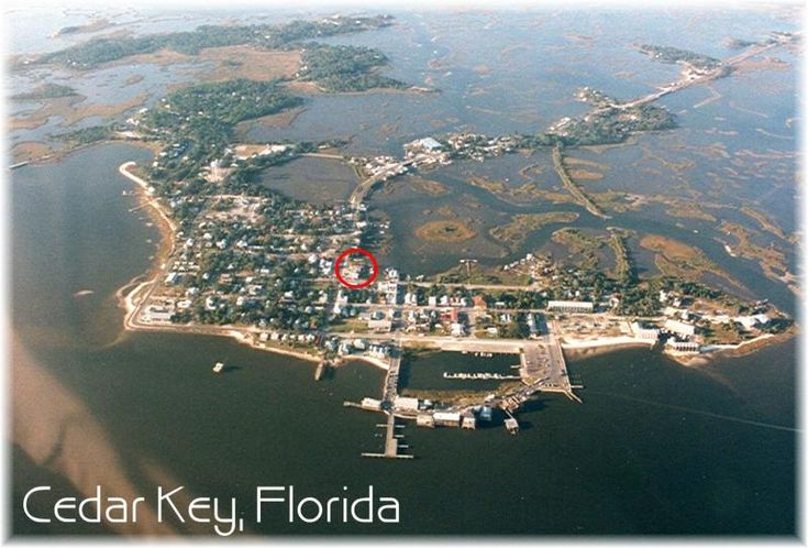 cedar key fl | ... shop hwy 24 cedar key fl 352 543 6601 cedar key dive shop is managed