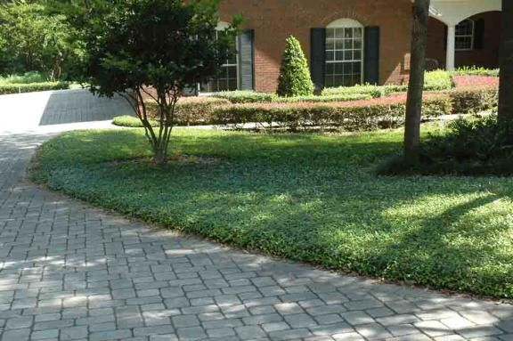 groundcover for a low maintenance yard