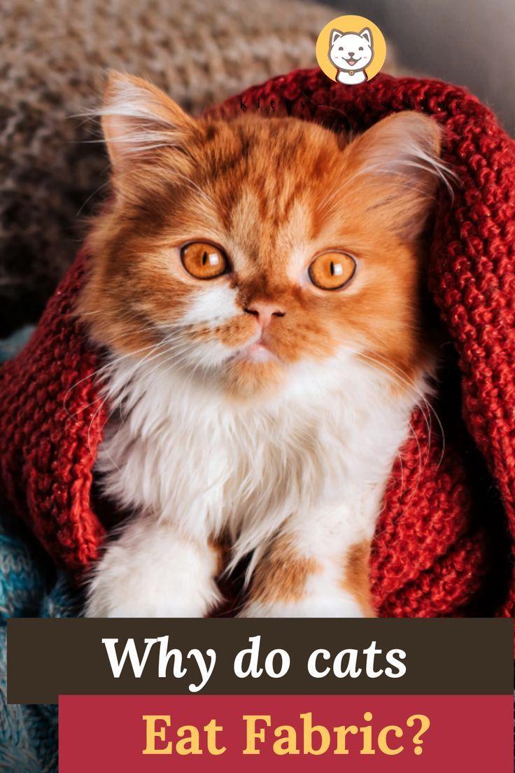 843052c0c5f24fe82f0432252ad9d44d - How To Get My House Cat To Lose Weight