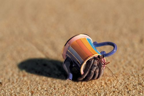 Hermit crabs move homes whenever they need more space...but usually to a bigger shell not a teapot.