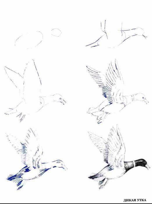 Иллюстрация 14 из 14 для Рисуем 50 птиц - Эймис, Д'Адамо | Лабиринт - книги. Источник: Спанч Боб