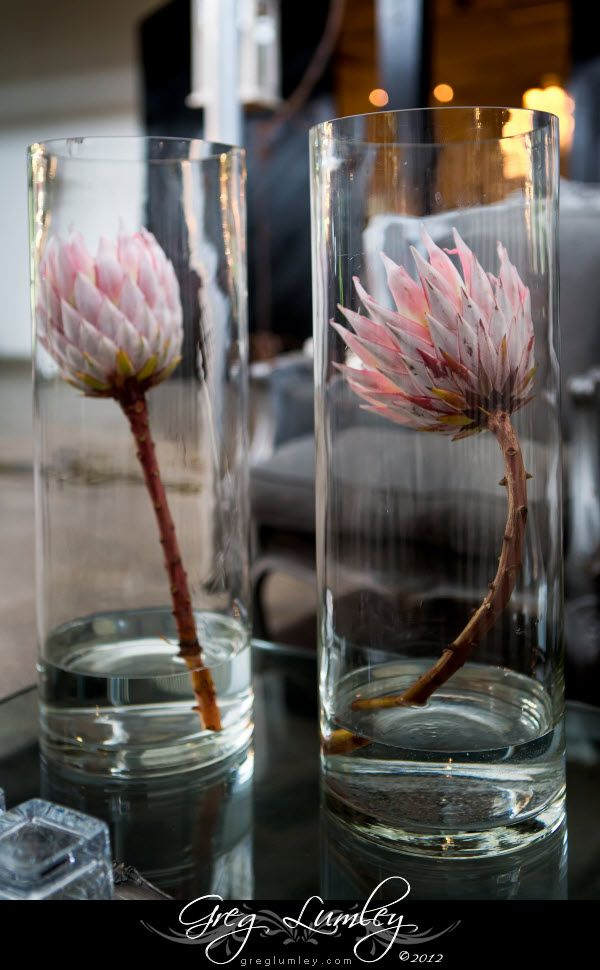 Pink South African protea flowers wedding Decor in glass vases