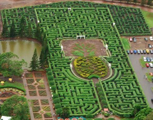 Dole Pineapple Plantation and the MAZE!