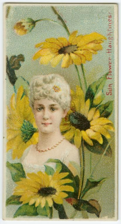 """Sunflower, Haughtiness - Duke's Cigarettes, """"Floral Beauties & Language of Flowers"""" series from The New York Public Library Digital Collections."""