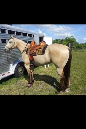 8 year old 2D/3D Barrel Horse For Sale