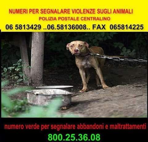 Chiesa di San Lorenzo: Numero verde per segnalare i maltrattamenti sugli animali!
