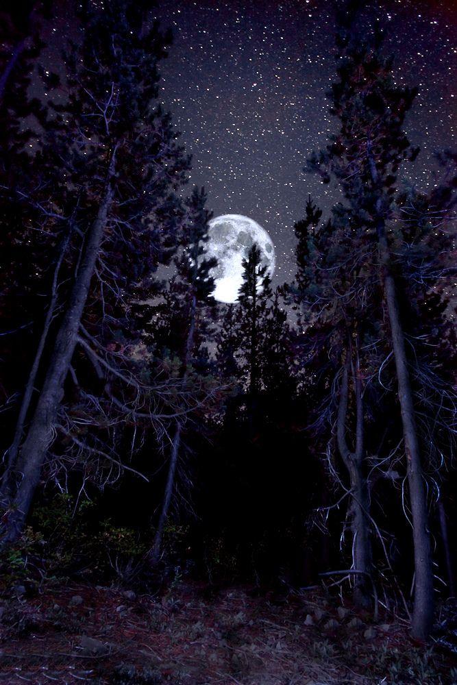 Картинки лунная ночь в лесу