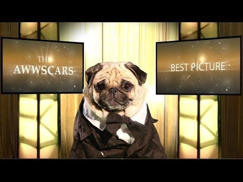 "The ""Awwscars"" are the real deal. 