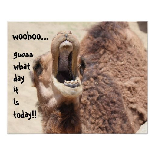 Best Hump Day Quotes: Best 25+ Funny Camels Ideas On Pinterest