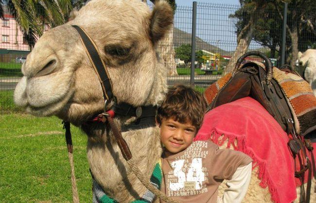 Kids Camel Rides @ Imhoff. Photo. Cape Camel Rides