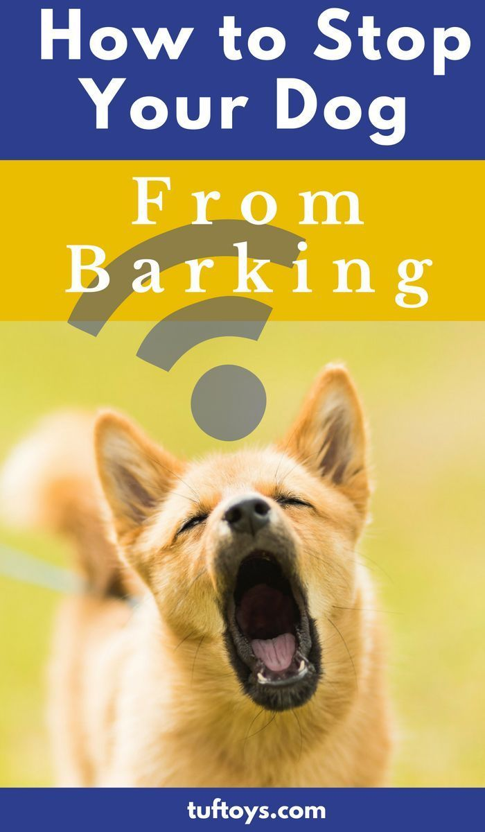 How To Stop Your Dog Barking Dog Training Tips Dog Training
