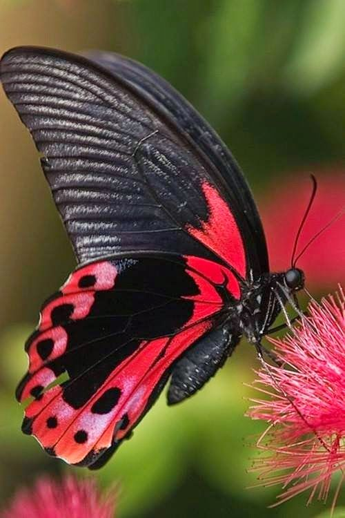 Butterflies Cute Wallpapers Free Download Cute Butterflies Pictures