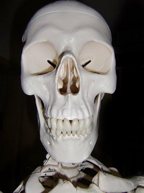 Dream Journal Experiment: Bobble-head skeleton