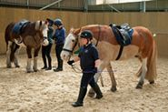 Located in the New Forest, The Fortune Centre of Riding Therapy offers children between the ages of 2 and 12 (with various disabilities) the opportunity of a weekly riding therapy session during school term time. Check it out and watch your child's face light up as they take the reigns!
