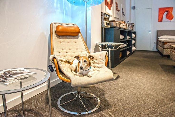 Tierischer Besuch bei DUXIANA. Der kleine Zeus wartet auf die DUX Dog Bed Collection. Bis dahin nimmt er Platz auf den Mini-Betten und dem DUX Jetson Sessel - Farblich Ton in Ton natürlich.