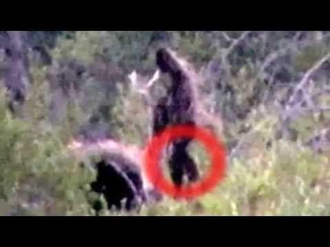 Bigfoot Photo Taken 8-18-2012