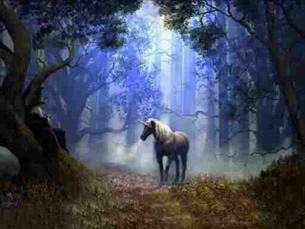 Spotting a Unicorn is like catching a falling star. . . it's so magical it whisks you off to another land in the twinkling of an eye.. .