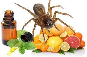 Használd ezeket, hogy többé egyetlen pókot se láss a lakásban!