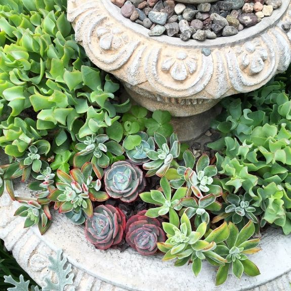 As the temperatures heat up my go to plants for containers are succulents.  Even filled my fountain with them!  Easy, carefree & pretty - that sums up summer time too!