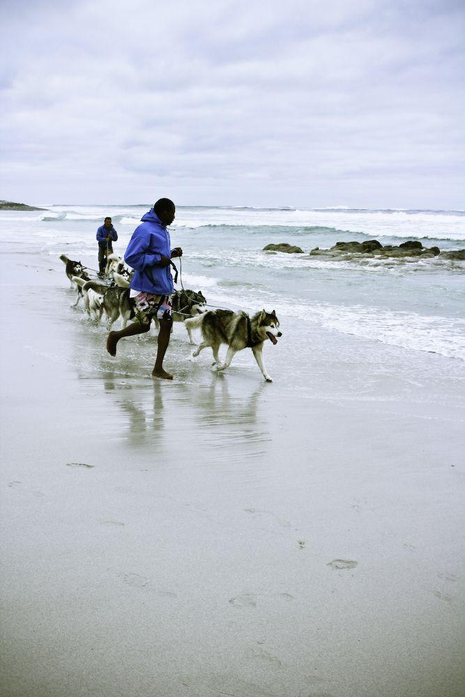 Husky sledding Kommetjie Cape Town