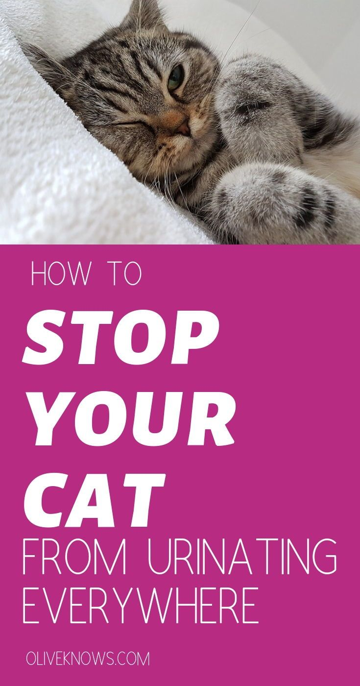 How To Stop Your Cat From Urinating Everywhere Oliveknows Cat Training Calming Cat Cat Pee Smell