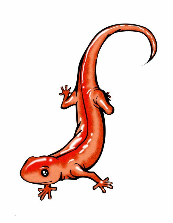 Salamander Tattoo - Would look perfect(NOT THIS EXACT THING, JUST LIKE HOW CUTE IS IT.)