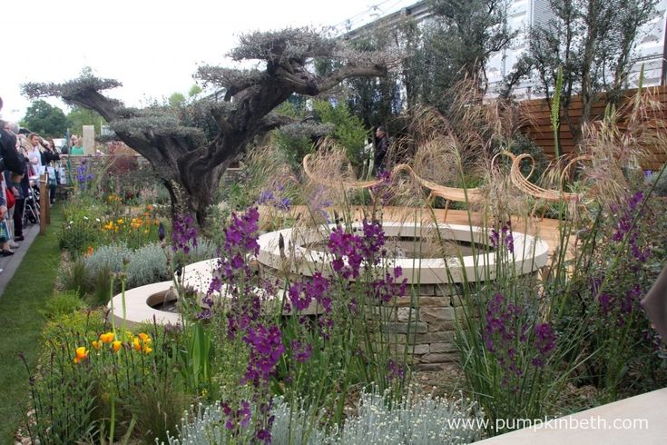 I loved the Olea europea, seen here in macro bonsai form in The Royal Bank of Canada Garden.  The beautiful, sculptural, arching seating was hand made by Tom Raffield from steam bent ash in Cornwall.