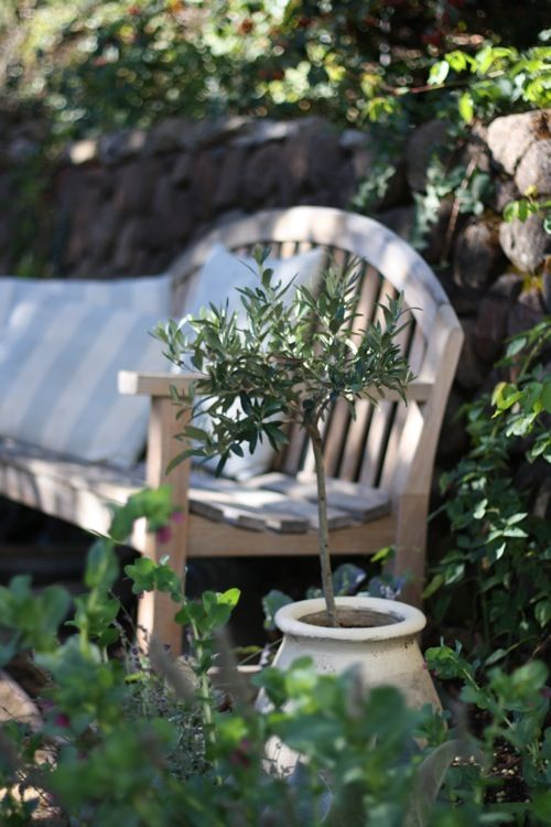 The weathered bench, the beautiful old pot, such a simple but lovely garden scene.