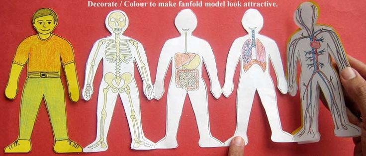 human body systems paper doll idea