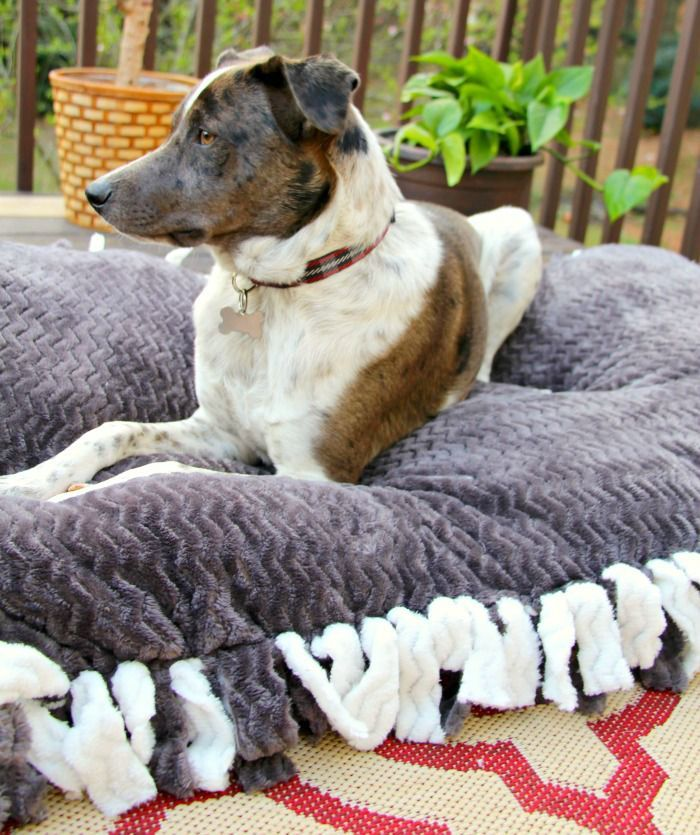 Comfy Diy Dog Beds Your Pooch Will Love With Images Dog Pillow