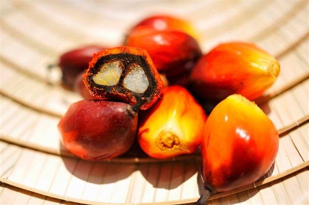 Palmový olej: levný zabiják, kterým se krmíme každý den