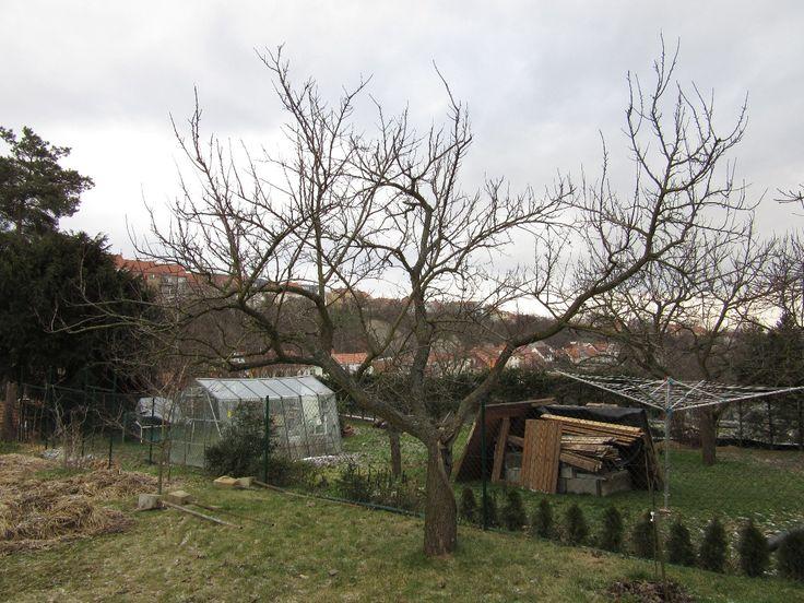 Desatero řezu ovocných stromů :: Údržba zahrad Brno