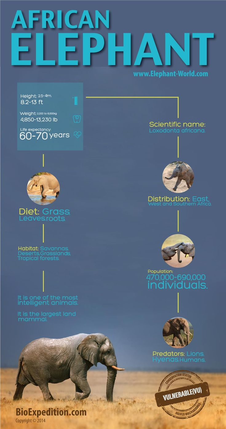 66 best elephant facts images on pinterest elephant facts