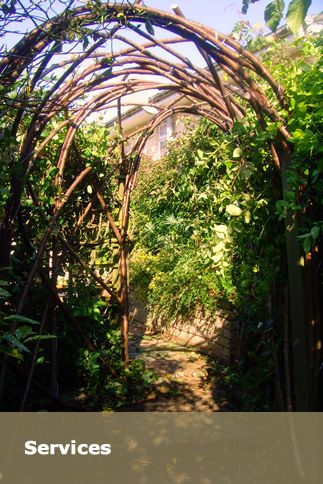 Arch Of Vines