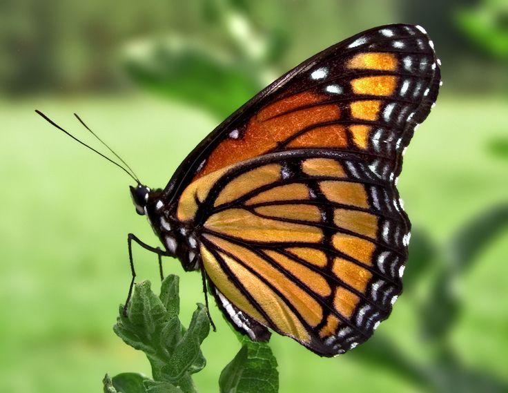 Butterfly Walk for Kids