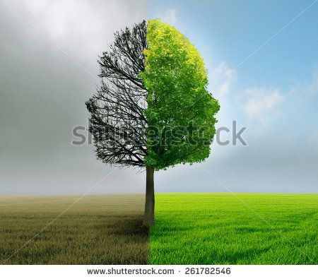 Human emotion and mood disorder tree shaped as two human faces with one half empty branches and opposite side full of leaves as medical metaphor for psychological contrast in feelings. - stock photo