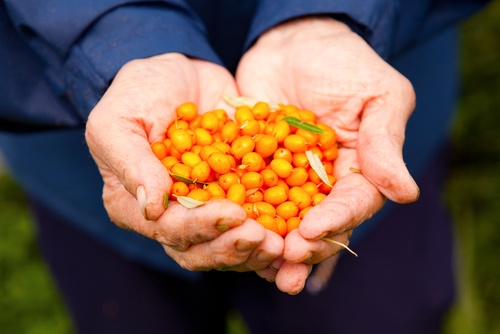 Dr Oz: Dr Andrew Weil's Elixir Recipe with Sea Buckthorn Super Fruit